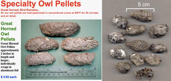 Owl_pellets_for_all